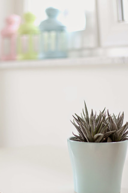Kaktus in türkisfarbenem Übertopf im Hintergrund leicht verschwpmmen die drei bunten Laternen