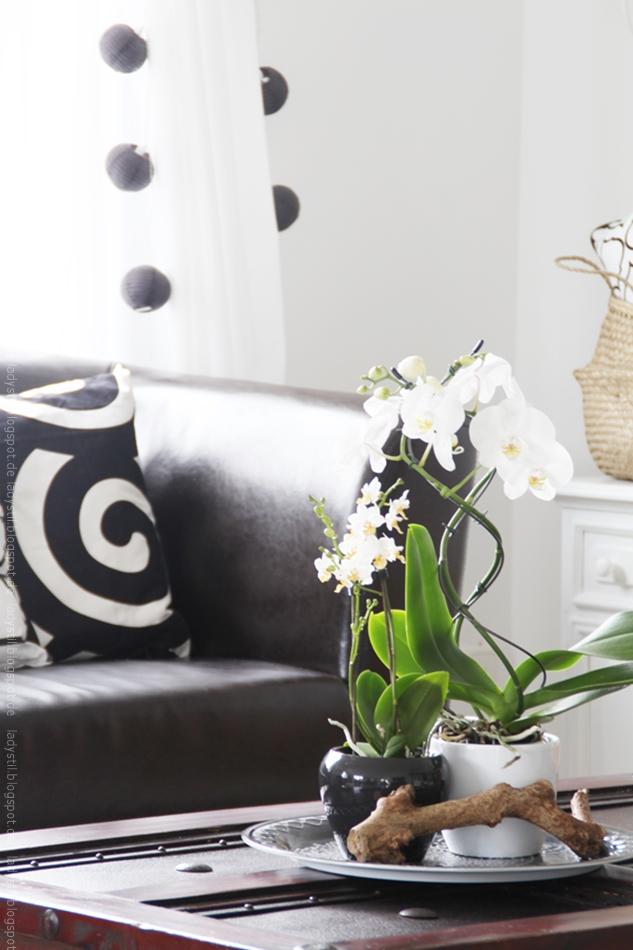 weiße Orchidee auf Couchtisch
