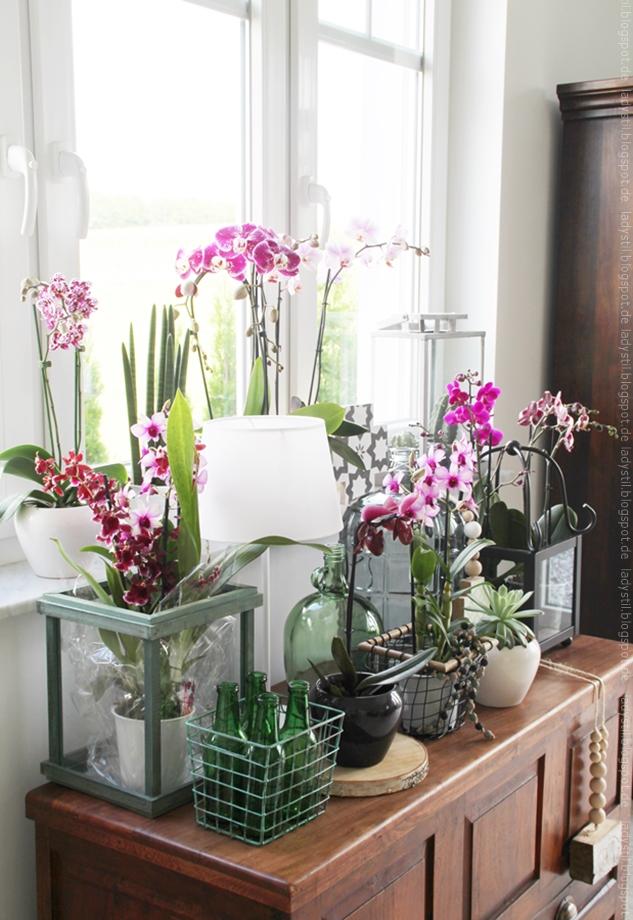 pinke Orchideen auf antiker brauner Truhe