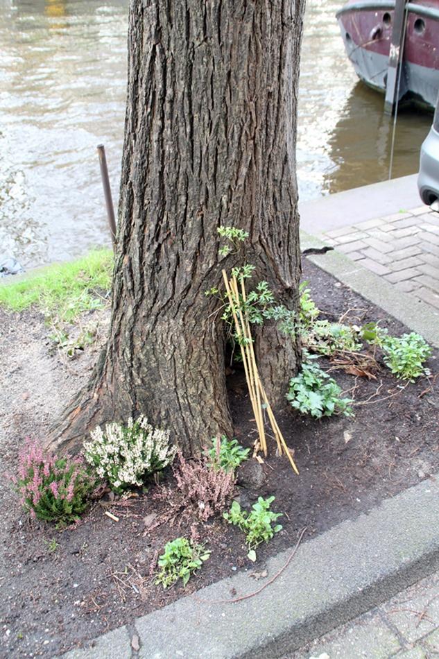 Baumwurzel am Straßenrand wird liebevoll mit Blumen bepflanzt