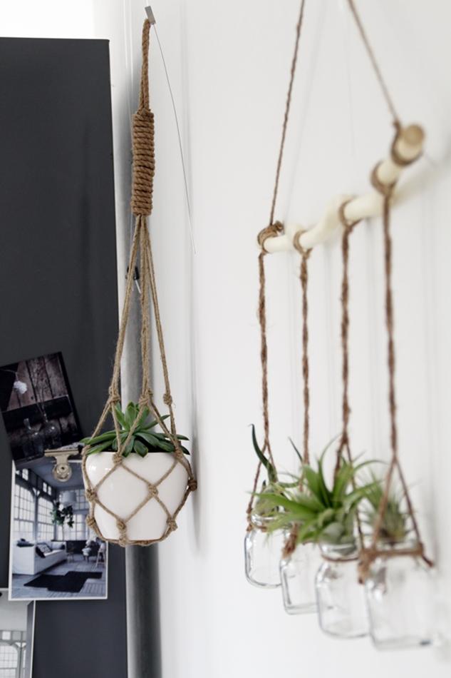 Luftpflanzen in einer Hängeampel